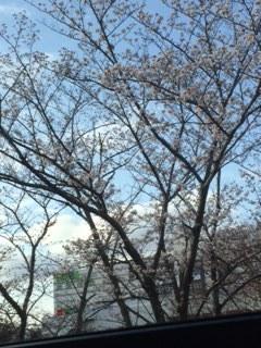 バス停の桜.JPG